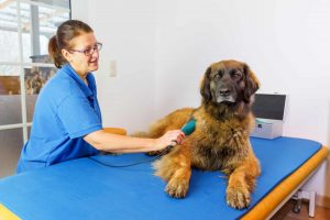 Veterinary nurse caring for a dog